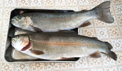 12月1週目釣果2匹
