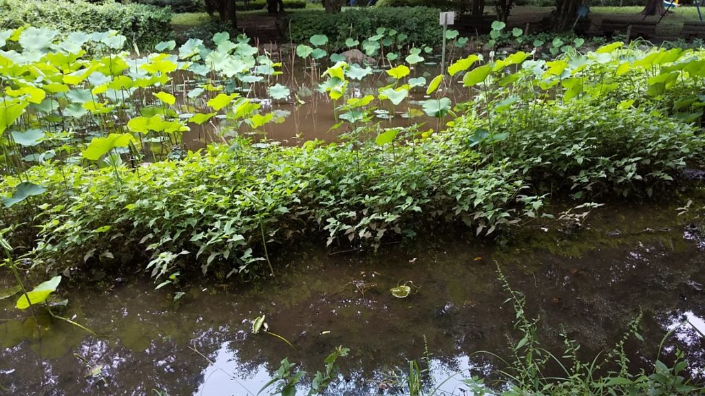 滝の城址公園5
