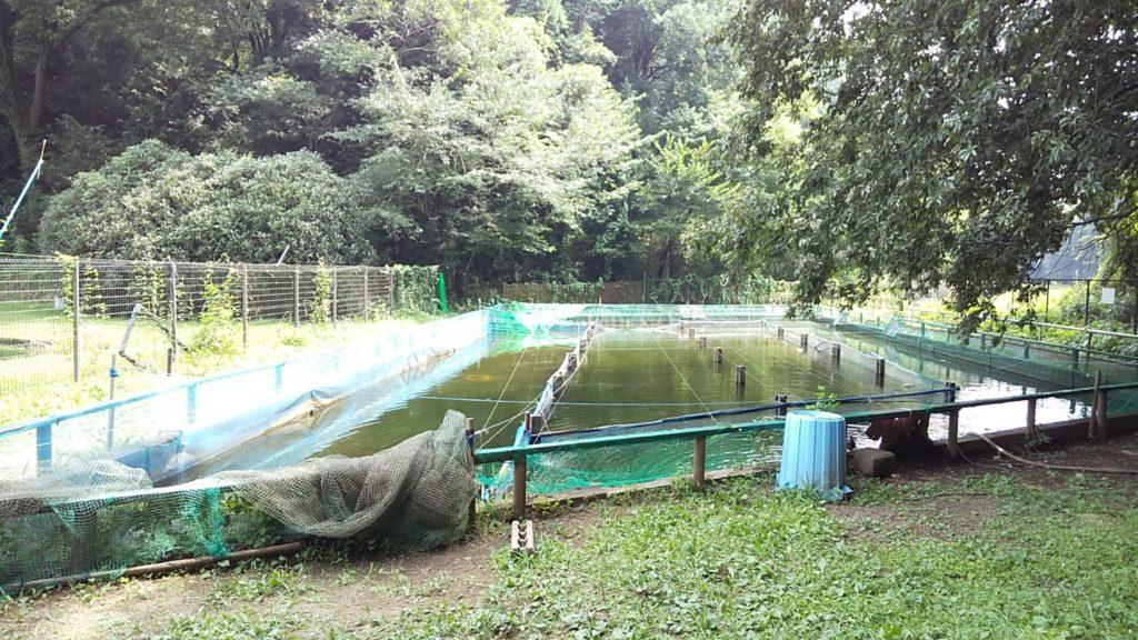智光山奥の池