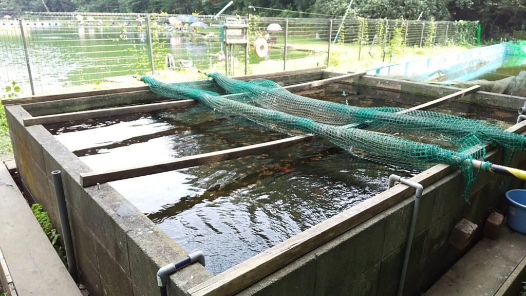 智光山手前の池